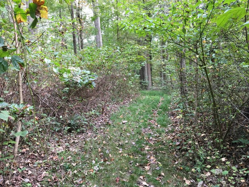 Grassy section of trail