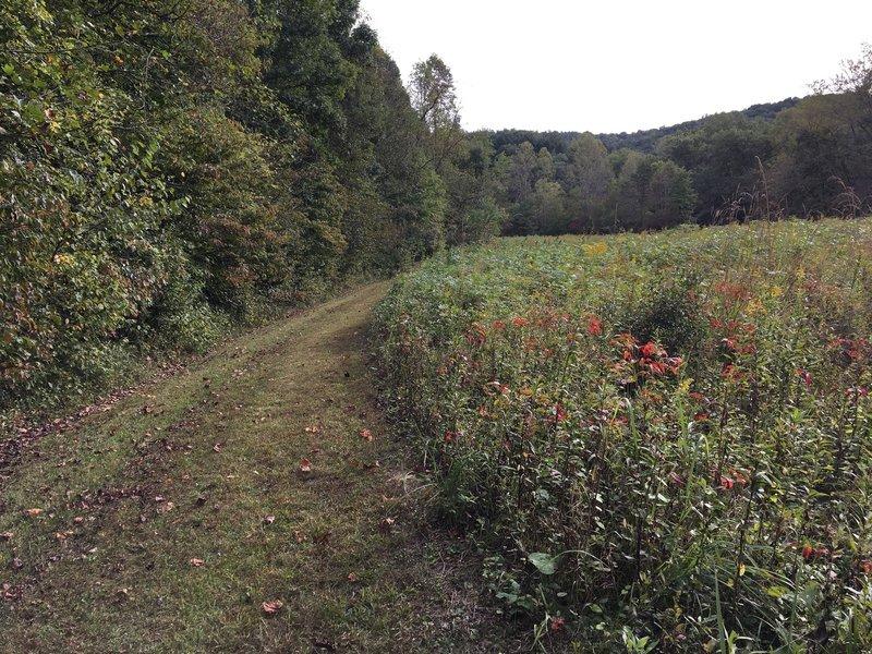 Grassy trail and prairie meadow
