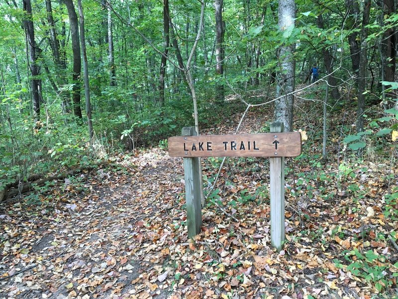 Intersection of Chestnut Trail with east leg of Lake Trail.
