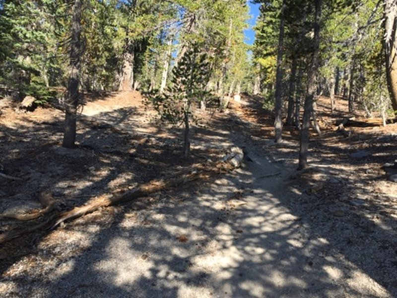 Beginning of the trail. Slight uphill.