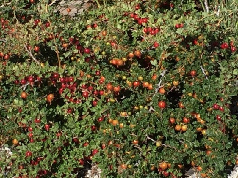 Wild Berries, local floral and fauna.