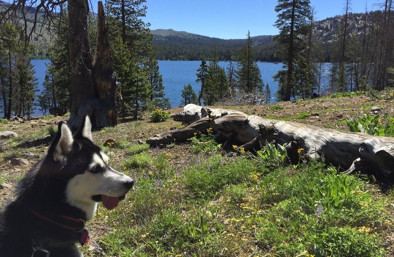South shore of Caples Lake.