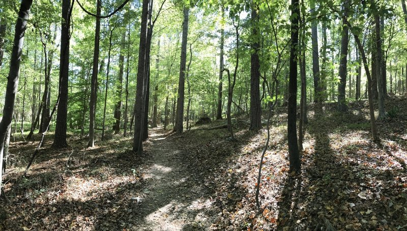 Entering the forest on the Laurel Bluff Trail.