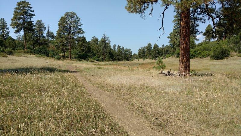 Coyote Hill Loop - Heading back towards trailhead.