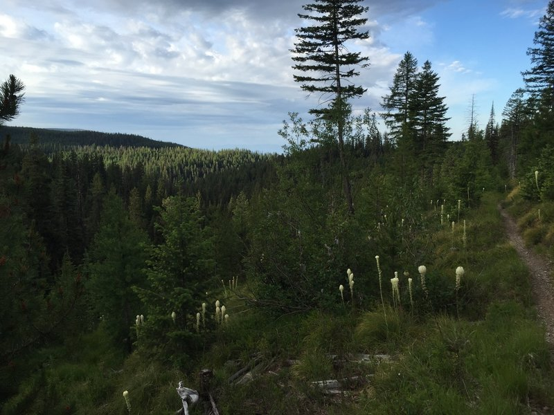 One of the few views from Beardance Trail.  The lake in the distance, some bear grass up close.