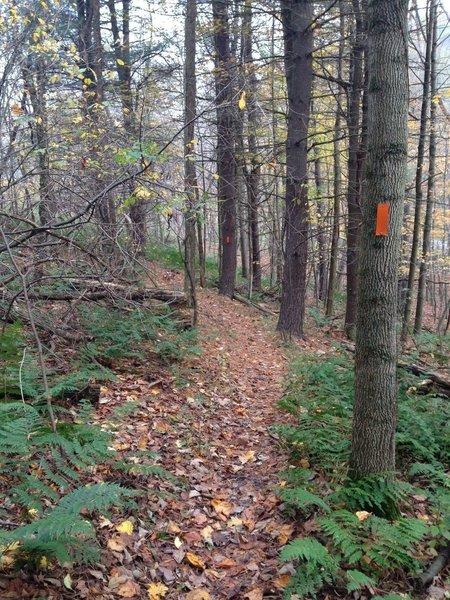Near the bottom of Crist Ridge Trail.