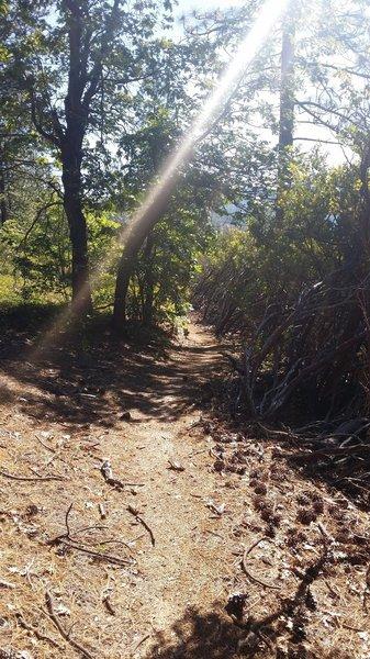 A nice narrow track through the manzanita forest - on the Malakoff Diggins Rim Trail.
