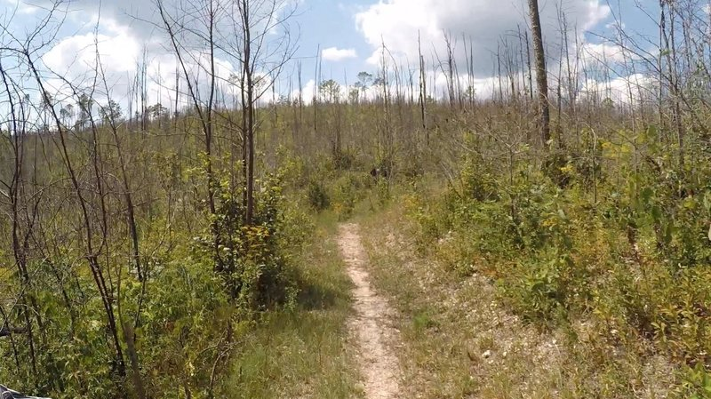 Dry Creek goes from deeply forested to totally exposed as you hit the logging road into the logging area.