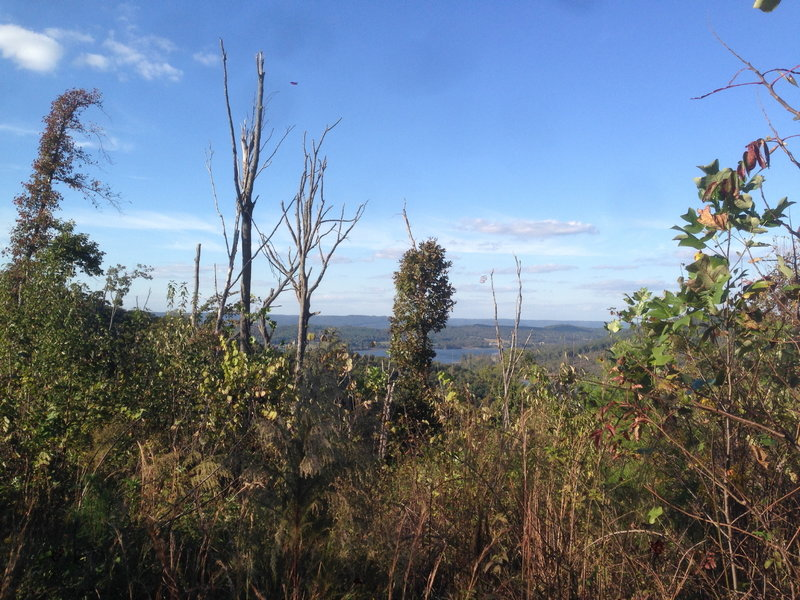 View of Lake Guntersville above trees damaged during the April 2011 tornado outbreak.