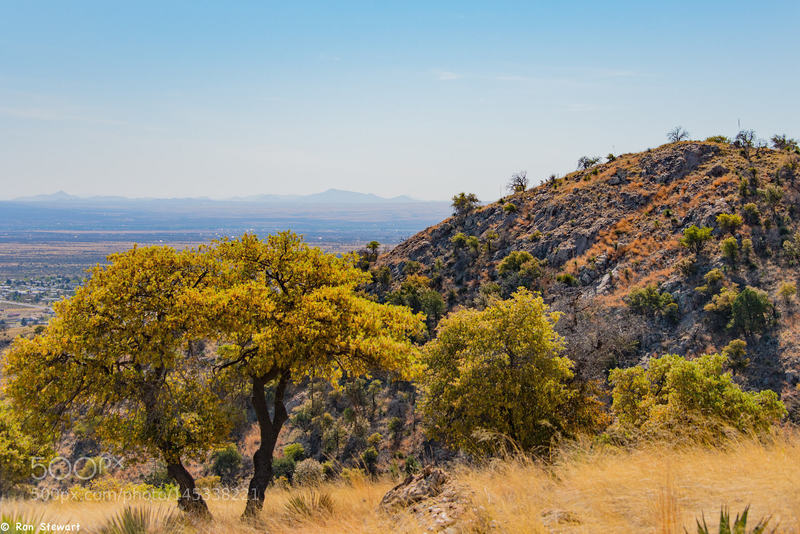 Spring Time in the Desert: Oak trees turning during the spring dry spell.  Views of the Huachucas from the Perimeter Trail just west of Sierra Vista.