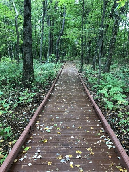 The boardwalk part of the trail makes its way through the woods. Interpretive signs provide information regarding the war in this area.