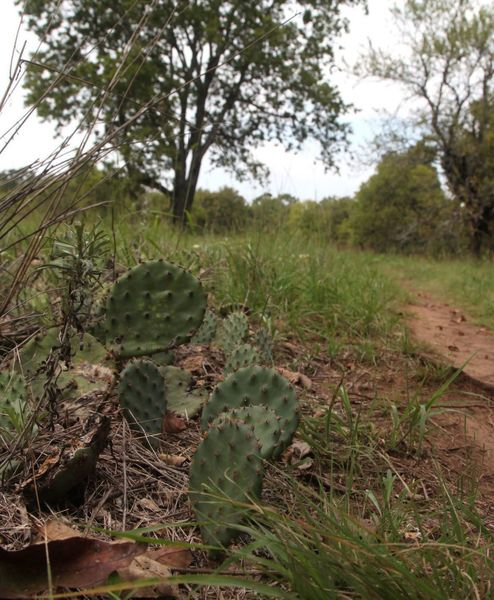Cactus just off the Prairie Fork
