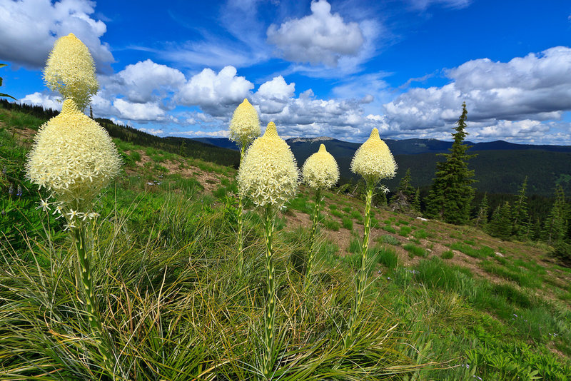 Beargrass and Lookout Mountain