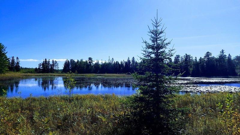 Canada Goose Pond, Wilderness State Park, Michigan