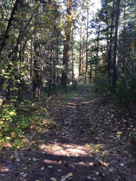 Trail on October 8th
