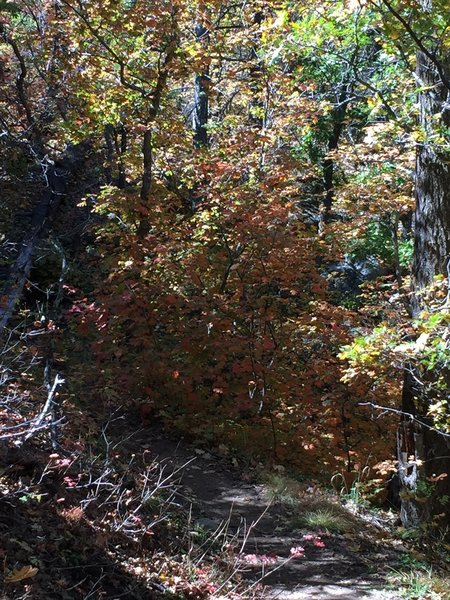 Photo doesn't do this justice. Some fall color in the area.  Sorry this is not along the trail, I missed the turn at the switch back and got this along the way back to the trail.