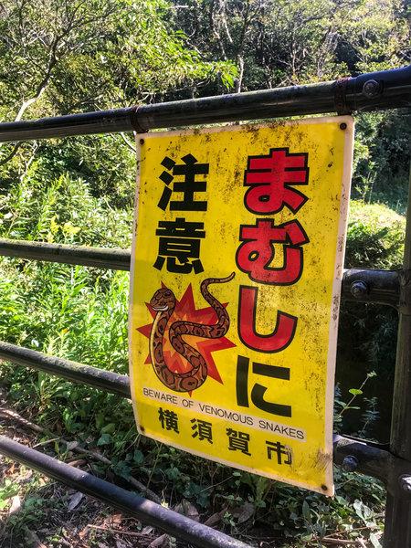 Beware of Venomous Snakes!!