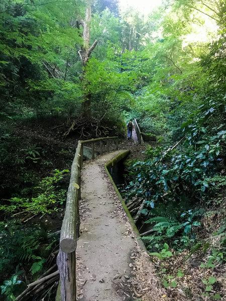A small bridge over a small creek.