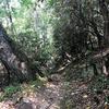 Along McKee Branch Trail.