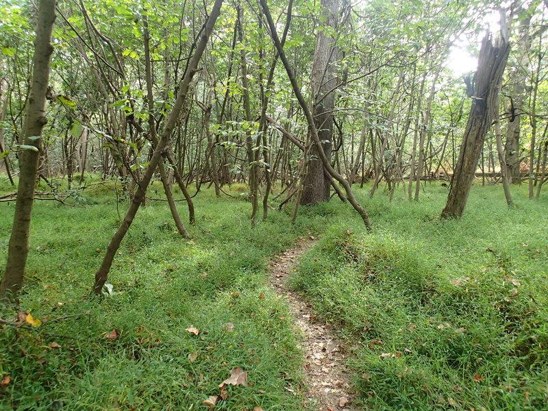 White Banks Trail.