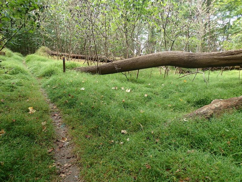White Banks Trail