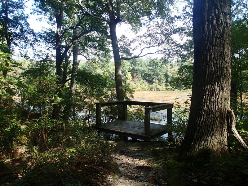 Observation platform overlooking Beaver Marsh
