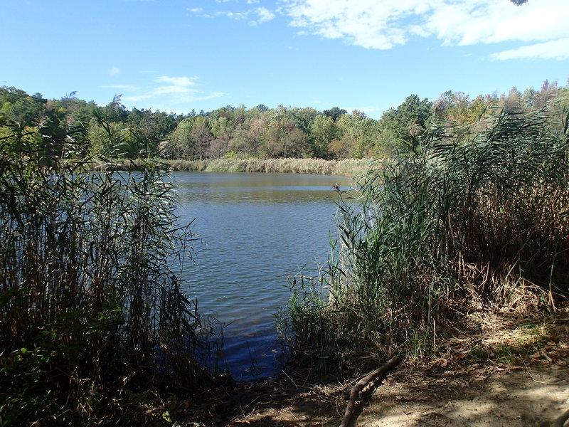 View of Wapiti Pond.