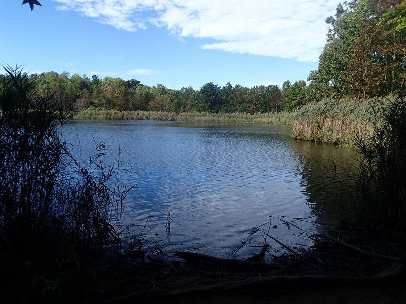 View of Wapiti Pond looking towards levee.