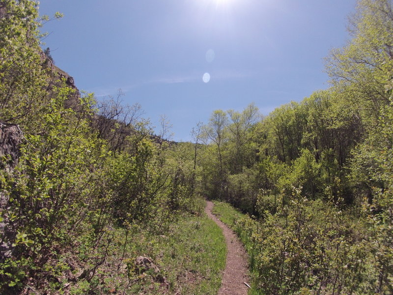 South Fork looking up. Beautiful!