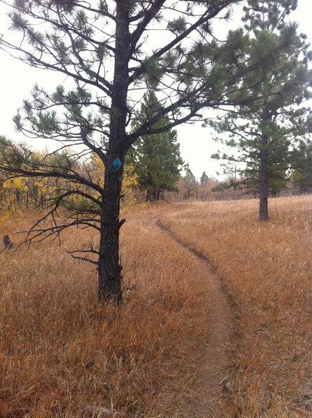 Sundance Trail—view east.