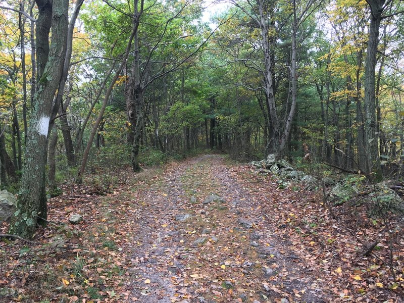 Mid State Trail, just off Tussey Mountain Road.