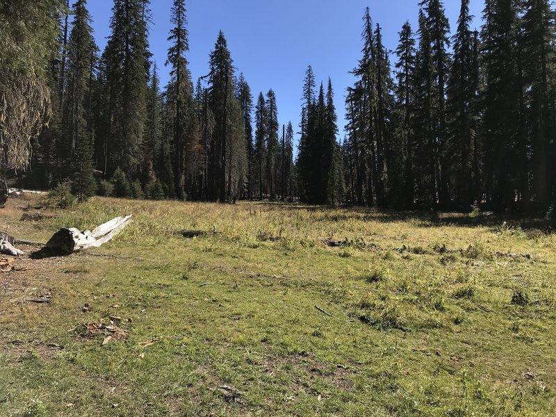 Let'er Buck Meadow on Haypress Trail.