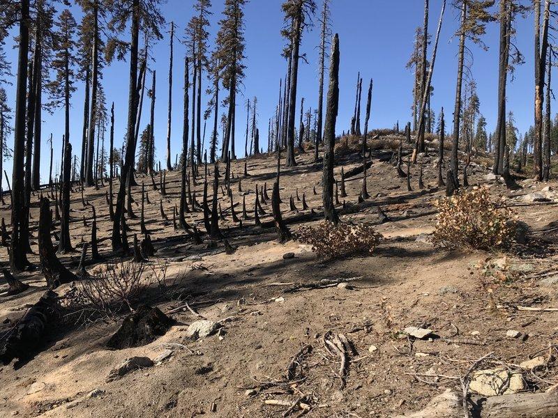 Burned section of Haypress Trail near Sandy Ridge