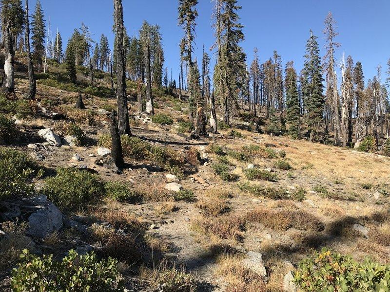 Haypress Trail near Sandy Ridge