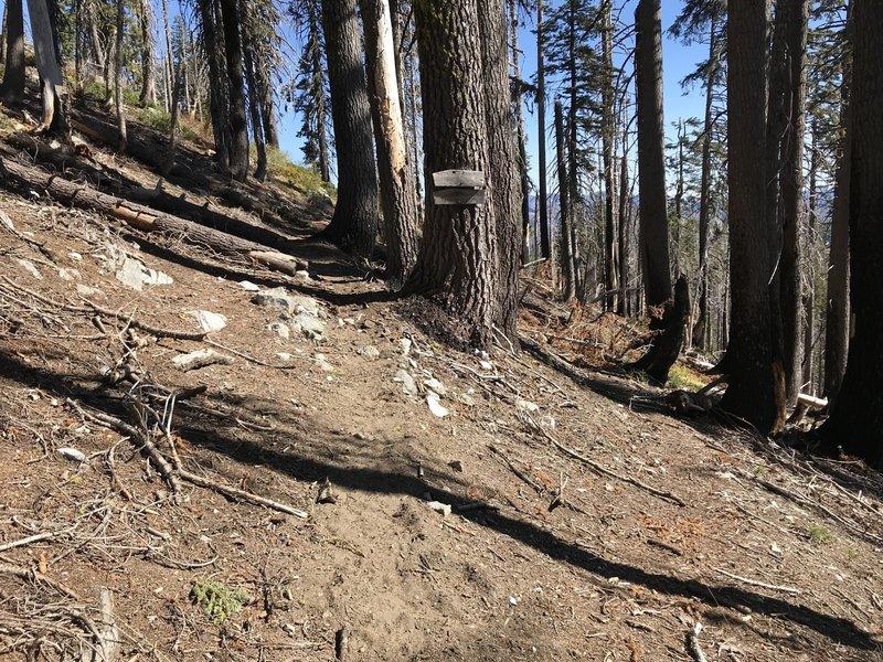 Bridge Creek Trail junction on Haypress Trail