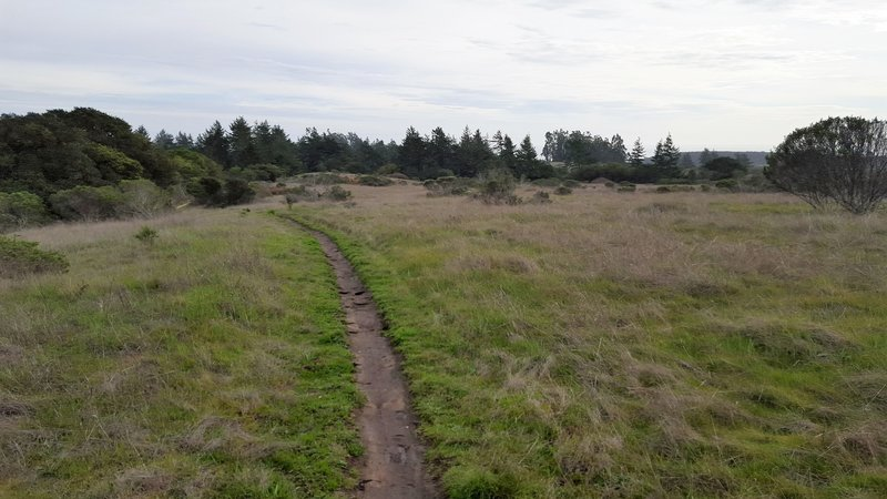 A section of singletrack on the Wilder Ridge Loop.