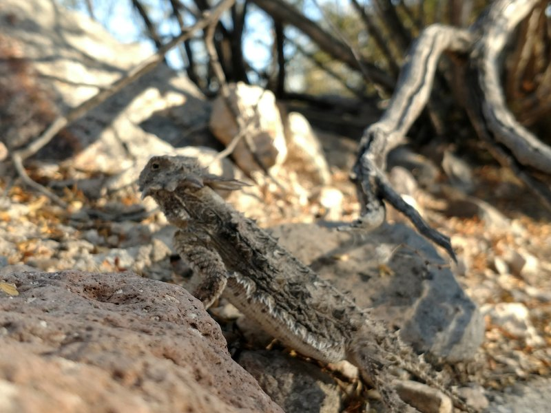 Keep an eye out as you might see some local wildlife like this horny toad lizard.