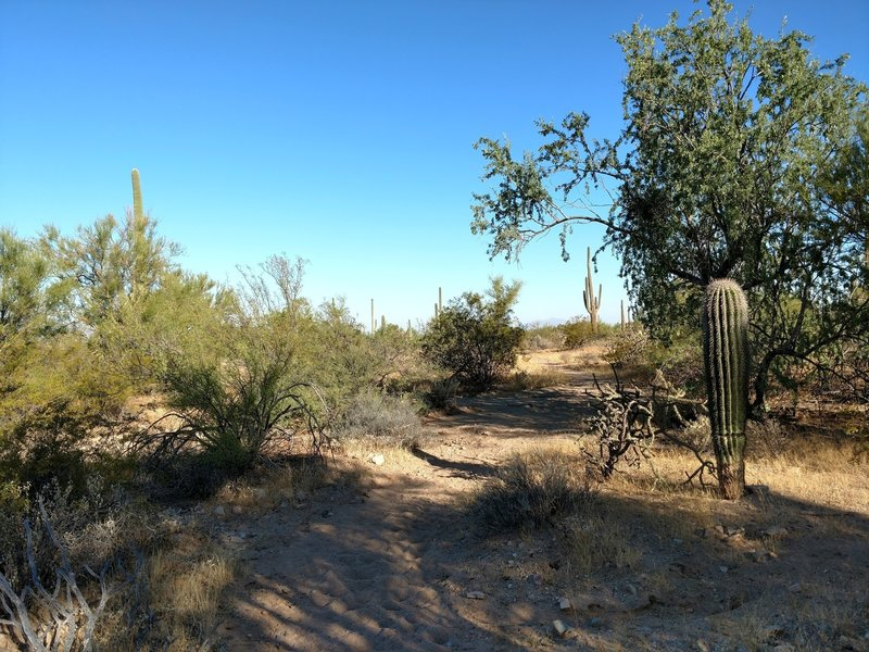 Shaded spot on the Cactus Wren Trail.
