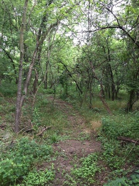 Help break in the trail!