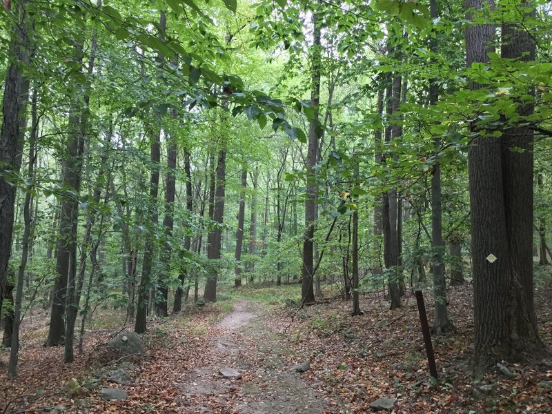 Trail through the forest.