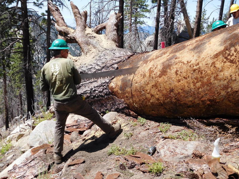 Volunteers clearing trees from Mt. Waterman Trail.