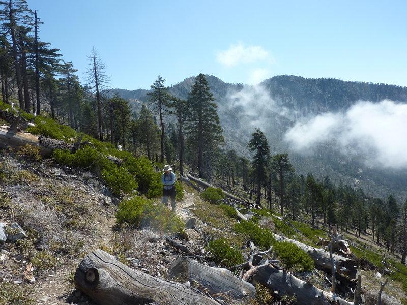 Big Cienega Trail looking east towards Hawkins Ridge