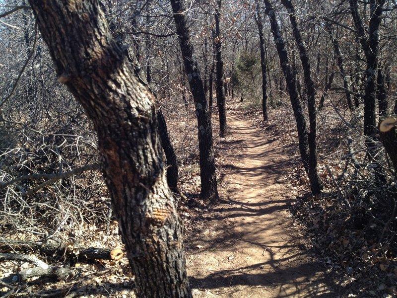 Singletrack through the oaks and greenbriar