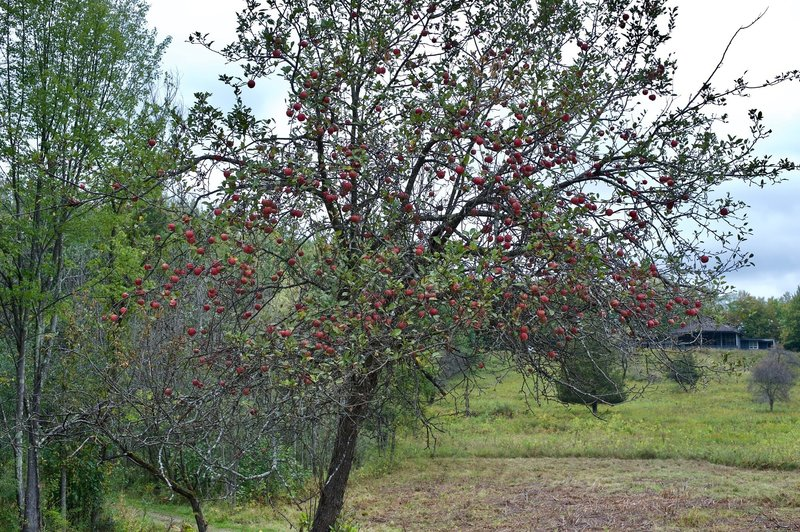 Apple trees can be seen throughout the park.