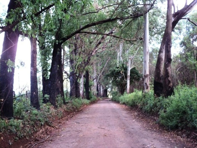 Dirt road before the singletrack