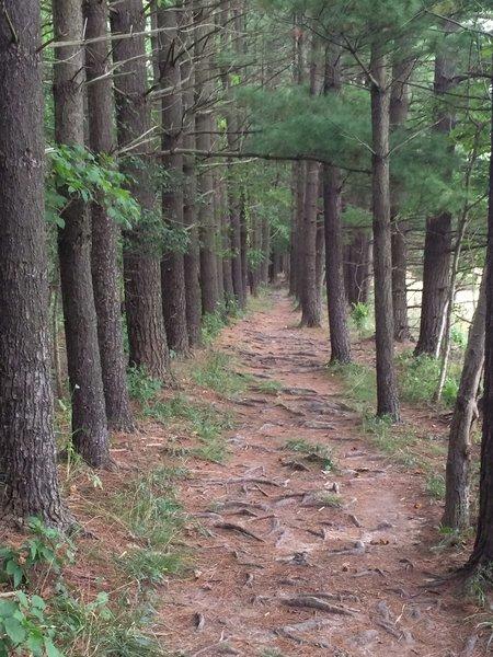 Buckeye Trail to Peninsula