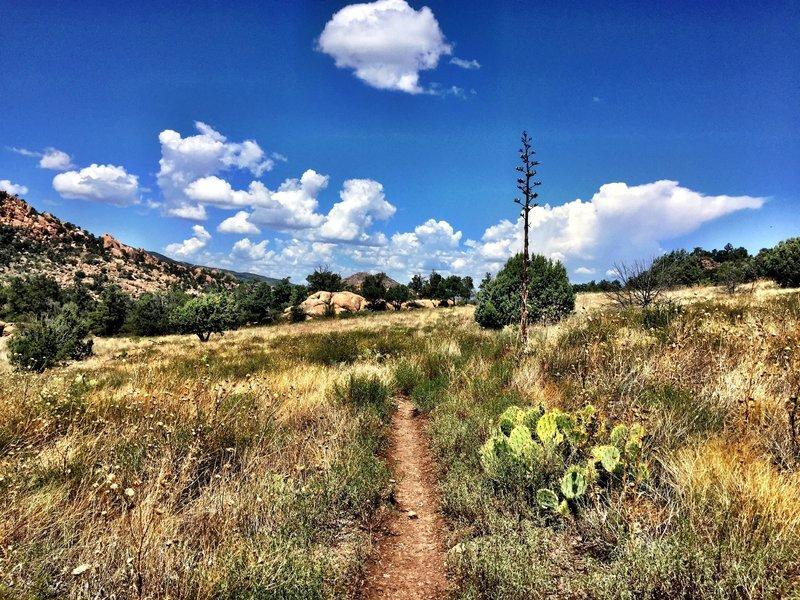 Cactus on Trail #345