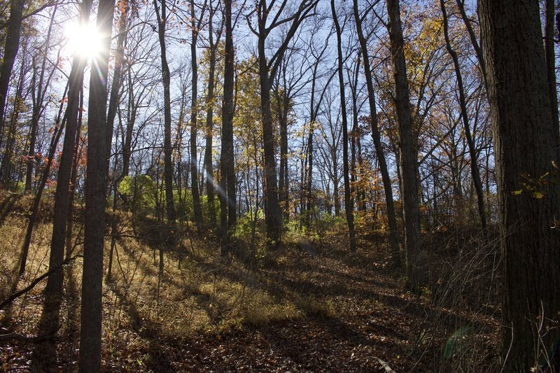 Fall in Indiana along the Memorial Loop Trail.