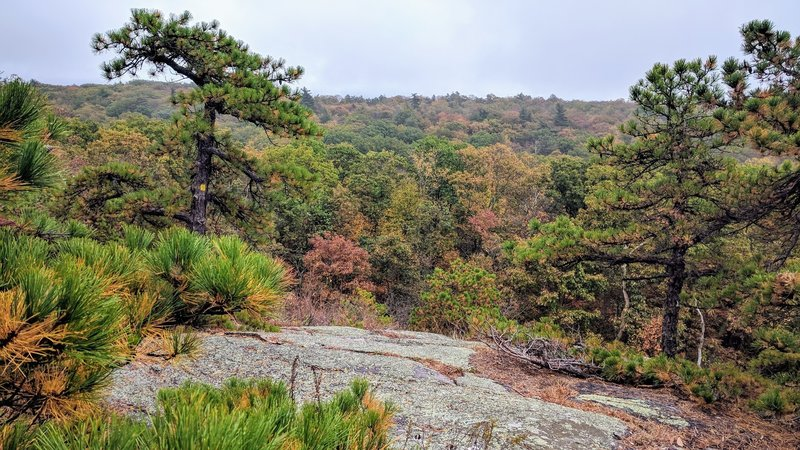 A picturesque rainy day along Bearfort Ridge Trail in Abram Hewitt State Park