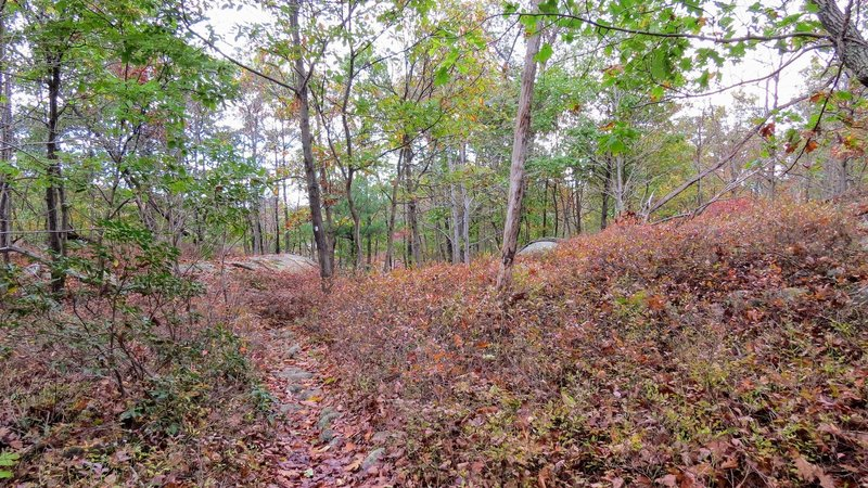 A fall day along the Macopin Trail
